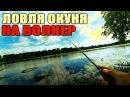 Ловля ОКУНЯ на волкер (уокер) | Ужгородский Стик | Атаки ЧАЕК!