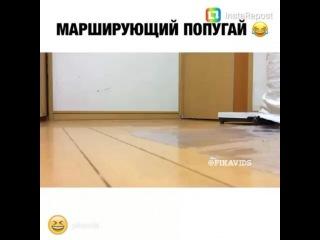 Instagram video by Artist Handmade Toys🐾 • Jan 19, 2017 at 6:24am UTC