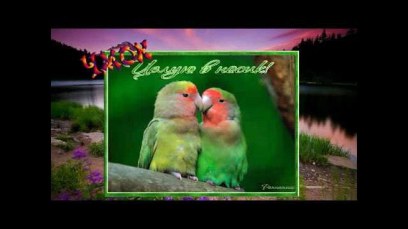 С Днём Поцелуя! . Дай Я ТЕБЯ РАСЦАЛУЮ! ( шутка)