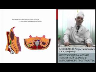 Хирургическая анатомия поясничной области и забрюшинного пространства