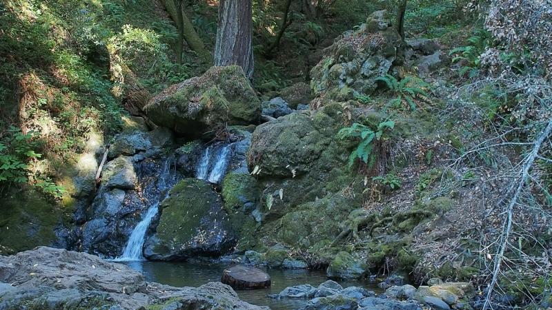 Cataract trail, Mt. Tamalpais