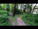 Тропинка в Гурьяновском лесу 1