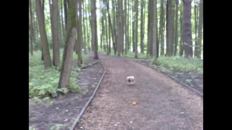 Кибо и Уля в лесу.