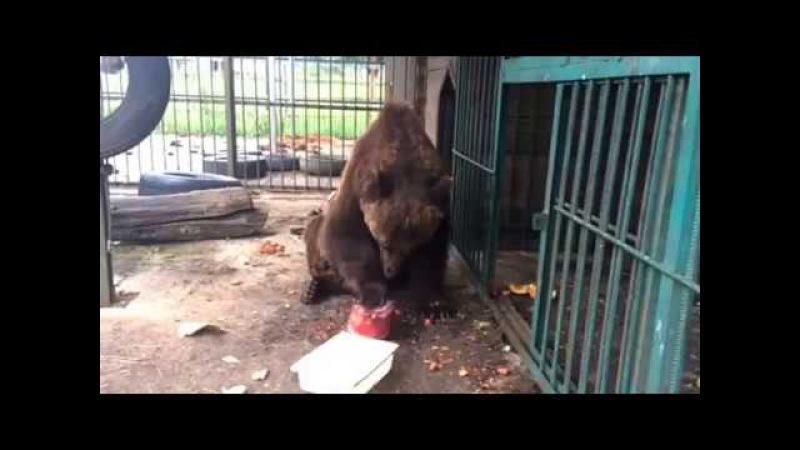 Потапыч и мороженое от Даши (Видео Даши)