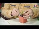Как вырастить рассаду перца Часть 2