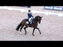 Tinne Vilhelmson Silfvén DON AURIELLO GP Freestyle CDI5* CHIO R'dam First Place 79.750%