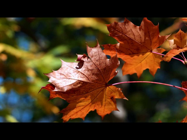 ОСЕНЬ. Музыка осени. Красивая осенняя мелодия любви без слов. Музыка дождя. Осенний танец (новинка!)