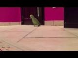 Зловещий смех попугая )))))