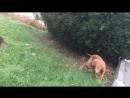 охота на льва тренировка