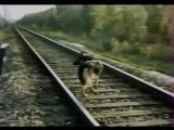 Прикладная дрессировка военных собак в СССР. Собака диверсант.