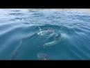 Крым. дельфины в районе Коктебеля!