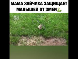 Мама деток в обиду не даст