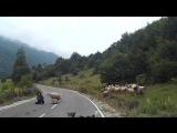 Пастушка и овцы
