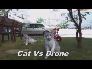 Cats Vs Drones - Video Compilation 2017 1 Кошки VS дроны - Подборка 2017 1 Квадрокоптер и кот