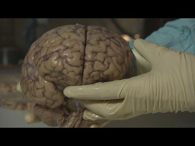 Тайны человеческого мозга futuris