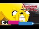Время приключений Ангелок Пропажа президента дельфина целая серия Cartoon Network