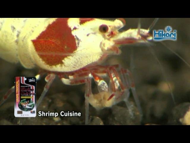 Having Hikari Shrimp Cuisine