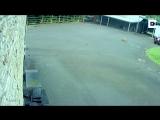 Лиса гонится за курицей/ITS TIME VIDEO