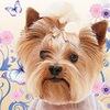 Милорд сеть салонов для собак – груминг собак в