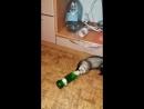 Хорек-алкоголик - горе в семье 🍻