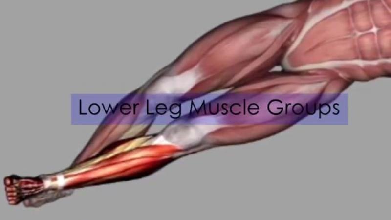 ZejaX Double Hammer Muscle Anatomy Breakdown