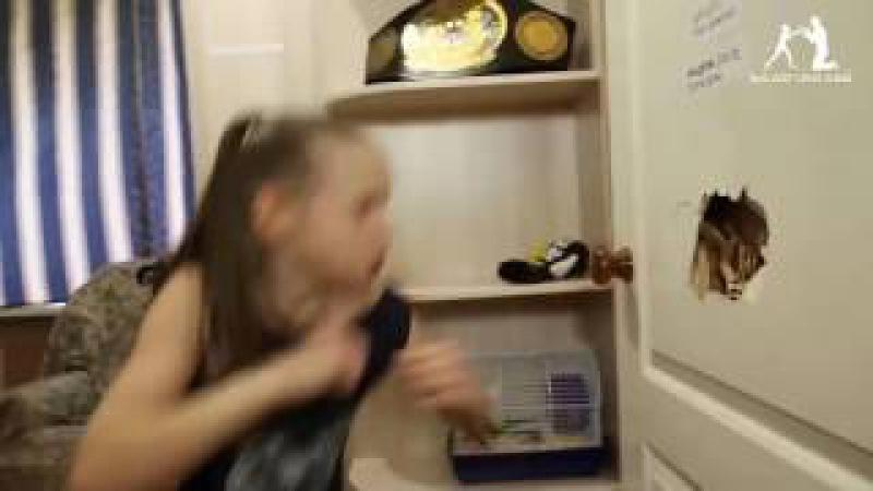 9 летняя девочка - боксер пробивает дверь в спальне