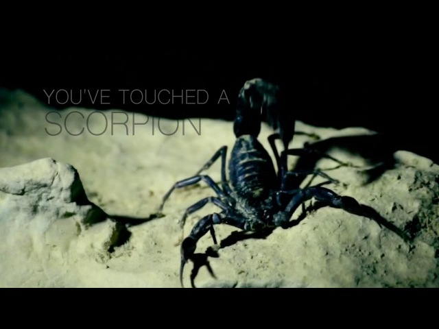 Youve touched a scorpion [penny dreadful vanessa dracula]