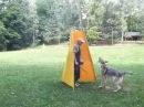 Beta z Molu Es-Pretorian Lobo kennel,československý, czechoslovakian wolfdog