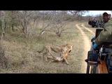 Amazing Animals Moments (Удивительные моменты из жизни животных)