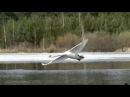 Лебедь в полете