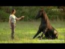 Посмотри как танцуют лошадки