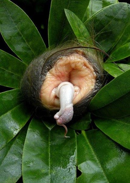 Странный цветок в лесах амазонки читать полностью