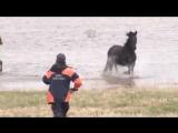 Спасение лошадей