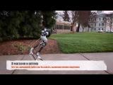 Cassie - двуногий робот-помощник человека