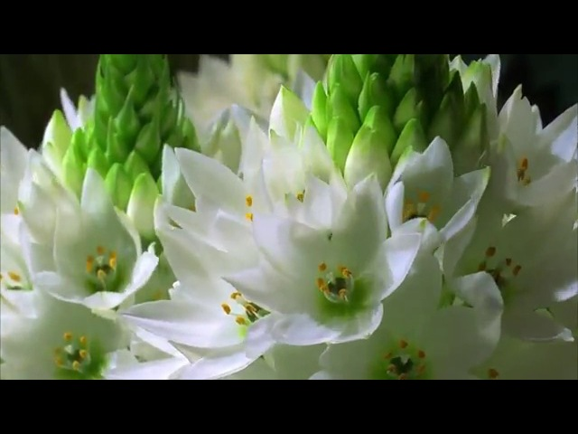 Как распускаются цветы.360