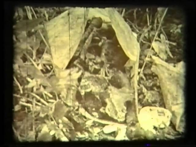 Фильм Горечь (С.Пестрецов) Мясной бор, 1986 г.