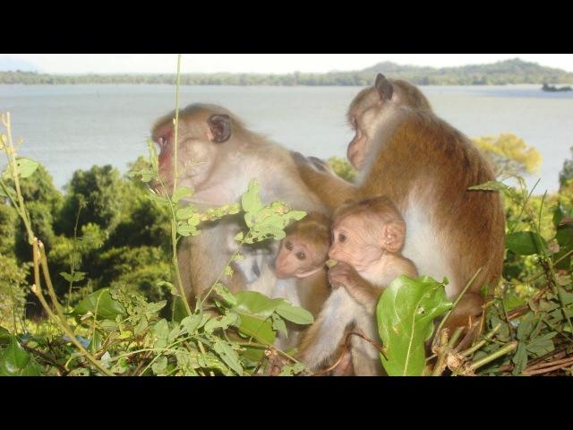 Комфорт в самом сердце дикой природы 🐒 Отель Heritance Kandalama, Шри-Ланка