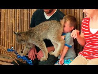Подборка приколов с детьми и животными в зоопарке