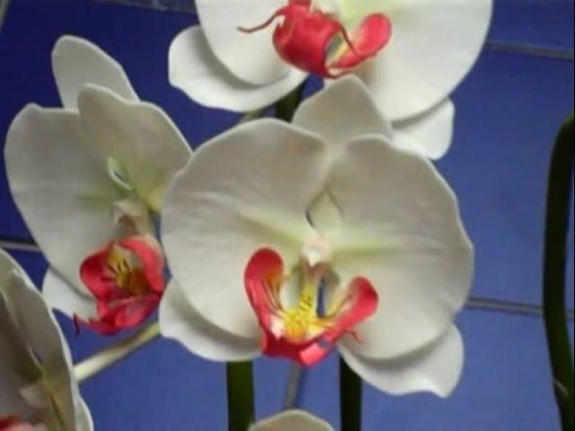 Hướng dẫn cách làm hoa đất sét Nhật Bản - Lan Hồ Điệp Trắng P1