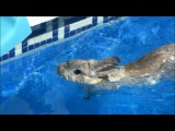Collection of funny rabbit videos swim