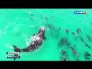 Впечатляющее видео!  Огромный кит станцевал вальс с дельфинами.