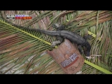 Law of the Jungle 170331 Episode 258 English Subtitles