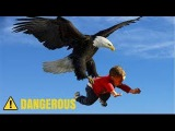 The Power of Eagles - Eagles VS Raids Dog, Bear,baby, Rabbit, Deer, Goat, Fox and Human