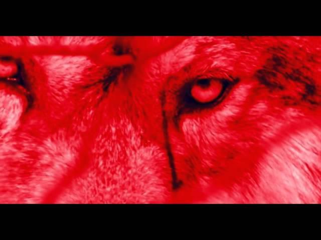 Комиссар - Волчья кровь(VidioMix)