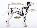 Как Измерить Собаку Узнаем Размер По Таблице