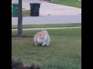 Fat cat runs - Толстый кот бежит - 猫