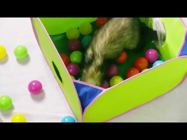 Игры хорька | Комплекс с мячами и тоннелем