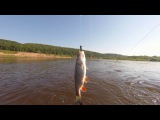 Летние зарисовки о рыбалке