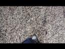 прогулка по ракушкам на берегу Чудского озера