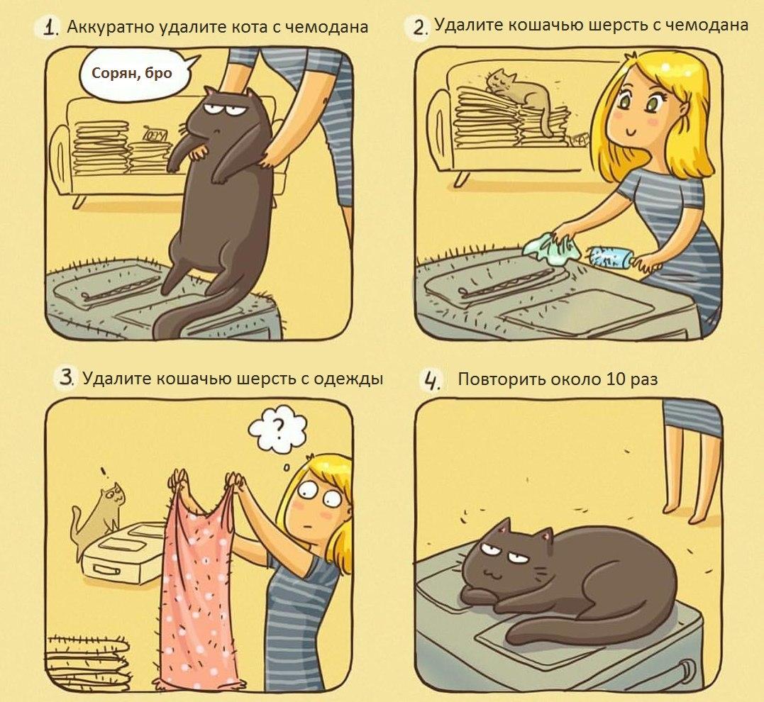 Как правильно собирать чемодан, если у вас есть кот: